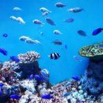 綺麗な熱帯魚ランキング!美しい人気のオススメ10選!