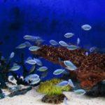 熱帯魚の飼育にかかる費用って?必要な道具&電気代は?