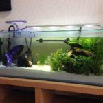 熱帯魚の水合わせの時間はどのくらい?簡単にできる3つの方法!