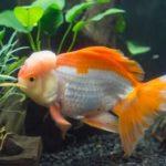 金魚のエアーポンプの電気代はいくら?1ヶ月にかかる料金の平均について!