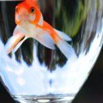 金魚のバクテリアでおすすめなのは?売れている5つのアイテム!