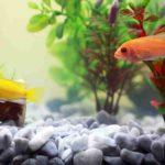 熱帯魚の水槽の水草の植え方を3つのステップで!【初心者向け】