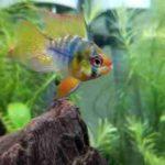 熱帯魚の水槽に泡や油膜ができる原因は?対策方法を紹介!