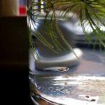 メダカの稚魚の餌はどうする?回数・量を詳しくご紹介!