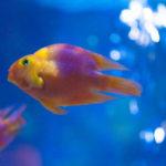 金魚の水槽の照明を付けたい!電気代は1ヶ月にどれくらいかかる?