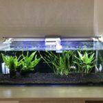 熱帯魚の水槽を立ち上げる方法って?準備や作り方の基本を徹底解説!