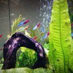 熱帯魚の水槽に酸素を入れるエアーポンプでエアレーションは必要?