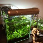熱帯魚の水槽おすすめベスト3!初心者のための選び方のポイント!