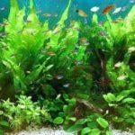 熱帯魚の水槽のフィルター掃除の時期と3ステップでできる掃除手順!