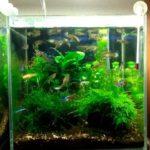 30センチ水槽で熱帯魚は何匹飼える?おすすめ種類&60センチの場合も