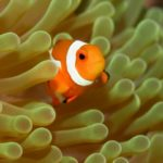 熱帯魚の海水魚で飼いやすい種類ランキングTOP5!【初心者おすすめ】