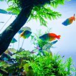 熱帯魚の水槽の掃除の頻度は?楽に済ませる5つのコツ!