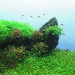 熱帯魚の水槽のレイアウトがおしゃれになる5つの作り方!