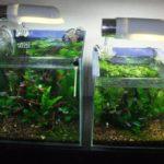 熱帯魚のヒーターの使い方は?正しい選び方やおすすめ3選を紹介!