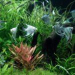 熱帯魚のヒーターの寿命はどれくらい?故障したときの症状と対処法!