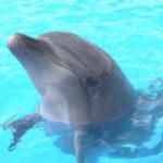 クジラとイルカの違いは?同じって本当なの?