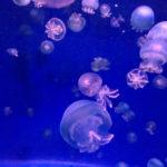 クラゲの水族館【九州編】福岡&沖縄で人気のおすすめ4選
