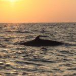 シロナガスクジラの大きさの比較!人や他の魚と比べてみた