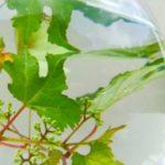 アクアリウムの水草の植え方!CO2はなしでも育つの?