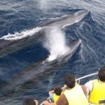 クジラウォッチングin沖縄!安い人気のおすすめスポット5選