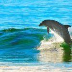 イルカのウォッチングを能登島で!人気のおすすめサービス3選