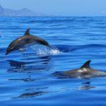 イルカのウォッチングは天草!おすすめの人気スポット3選