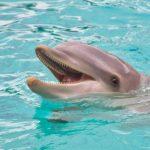 イルカのウォッチングは関東!人気のおすすめ施設ベスト4