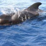 クジラの爆発はなぜ起こる?台湾で起こった悲劇とは?