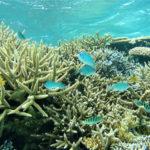 サンゴの白化を回復!再生させる方法と対策をまとめてみた