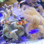 サンゴの水槽の立ち上げ!添加剤など水質の設備など必需品を紹介