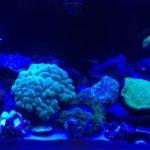 サンゴの通販!安いおすすめの人気サイト5選